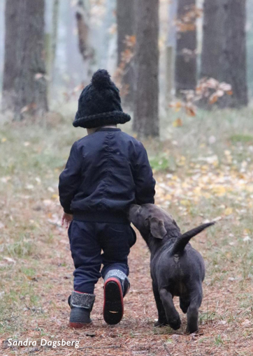 Hund bortgives gul og gratis